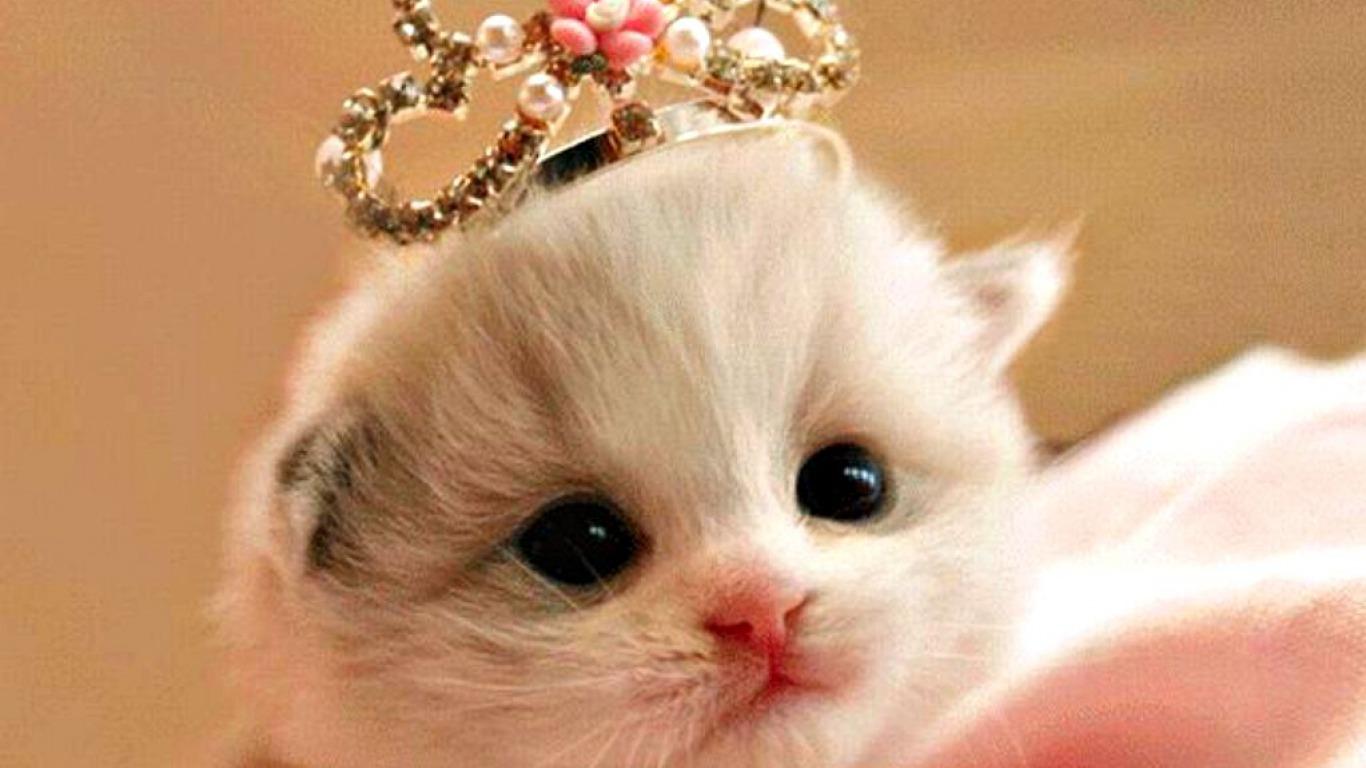 Popi Pebriani AMD Kucing Terlucu Dan Terimut