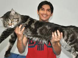 Kucing Termahal Setyasetia S